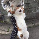 脱走して捕まった猫の表情に思わず頬袋が緩む件wwwwwww